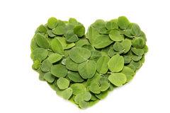 Heart of a clover leaf Royalty Free Stock Images