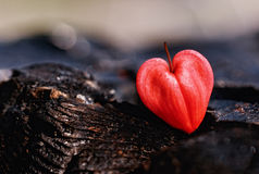 Heart. On the coals red Colour royalty free stock image