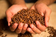 Heart of cofee grains in hollow the hand Stock Image