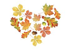 Heart of colorful autumn leaves isolated on white background. Simple cartoon flat style. Vector illustration. vector illustration