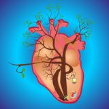In the heart, Stock Images