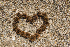 Heart of cones on the beach. Heart of cones on shells, beautifully formed Royalty Free Stock Image