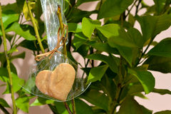 Heart Cookie hanging on a tree. Cookie heart in a gift plastic bag growing on a tree Royalty Free Stock Images