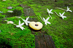 Heart cookie and white cork tree flower Royalty Free Stock Photo