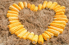 Heart of corn Stock Photo
