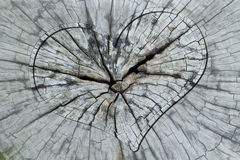 Heart in Cross section trunk Stock Photos