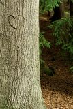 Heart in crust tree Royalty Free Stock Image