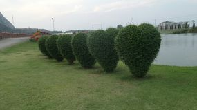 Heart cut bushes on lake side Royalty Free Stock Photo