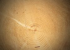 Heart of a cut tree Royalty Free Stock Image