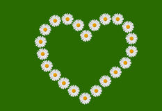 Heart and daisies Royalty Free Stock Photography