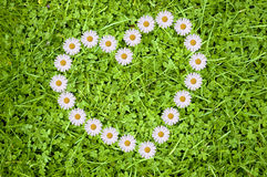 Heart and daisies Royalty Free Stock Image