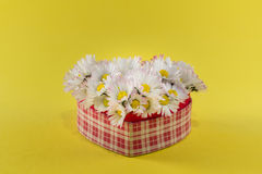 Heart of daisies Stock Photography