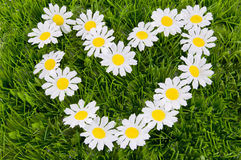 Heart of daisies on the grass Royalty Free Stock Image
