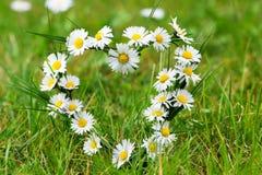 Heart of daisies Royalty Free Stock Photos