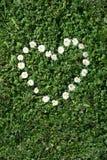 Heart of daisies Stock Photo