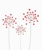 Heart dandelion Stock Photos