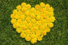 Heart from dandelion Stock Photo