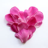 Heart of delicate pink petals Royalty Free Stock Images