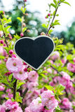 A heart depends upon a beautiful shrub flowering almond Stock Images