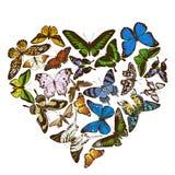 Heart design with colored morpho menelaus, graphium androcles, morpho rhetenor cacica, papilio demoleus, cethosia biblis
