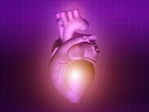 Heart disease 3d anatomy illustration purple pink. Heart disease 3d anatomy illustration health purple pink Stock Photo