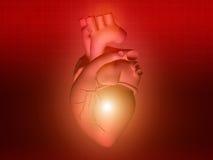 Heart disease 3d anatomy illustration red. Heart disease 3d anatomy illustration health red Stock Image