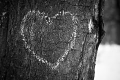 Heart drawn on tree trunk Stock Image