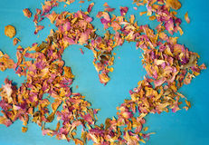 Heart of dried petals of tea rose on blue background Royalty Free Stock Image