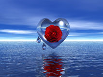 Heart and drops. Red rose in glass heart with drops and water Royalty Free Stock Images