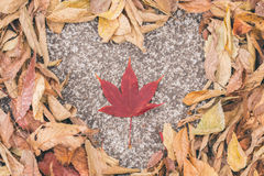 Heart on dry leaf. Valentine day Royalty Free Stock Image