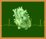 Heart and ECG line Stock Image