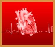 Heart and ECG line. Detailed of heart illustration on dark green gradient background stock illustration