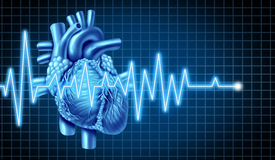 Heart and EKG  ECG Graph Stock Images