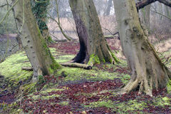 Heart of England Forest Stock Images