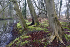 Heart of England Forest Royalty Free Stock Photography