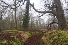 Heart of England Forest Royalty Free Stock Photo