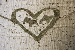 Heart Engraved on a Tree. Heart engraved on the bark of a poplar tree with illegible initials inside Stock Photo