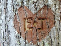 Heart Engraved On Tree. With initials royalty free stock photo