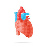 Heart faceted. Vector illustration of human heart with faceted low-poly geometry effect Stock Image