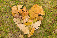 Heart of fallen leaves Royalty Free Stock Images