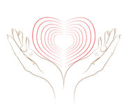 The heart in female hands. Royalty Free Stock Photo
