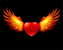 Heart in fiery wings. A color illustration on a black background Stock Images