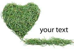 Heart of fir needles Stock Photo