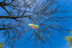 A heart with the flag of lithuania hangs on a tree royalty free stock image