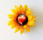 Heart Flower Stock Photos