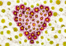 Heart of flower Stock Image