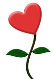 Heart flower Royalty Free Stock Photography