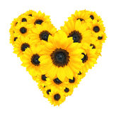 Heart flower design made of yellow sunflowers isolated on white Royalty Free Stock Photography