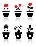 Heart in flower pot  icons set Stock Photos