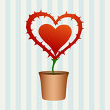 Heart flower with thorns Royalty Free Stock Photography